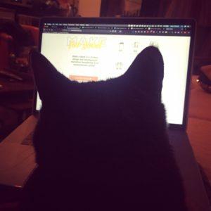 cat coding